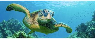 turtle banner 600x250 320x133 - turtle-banner-600x250